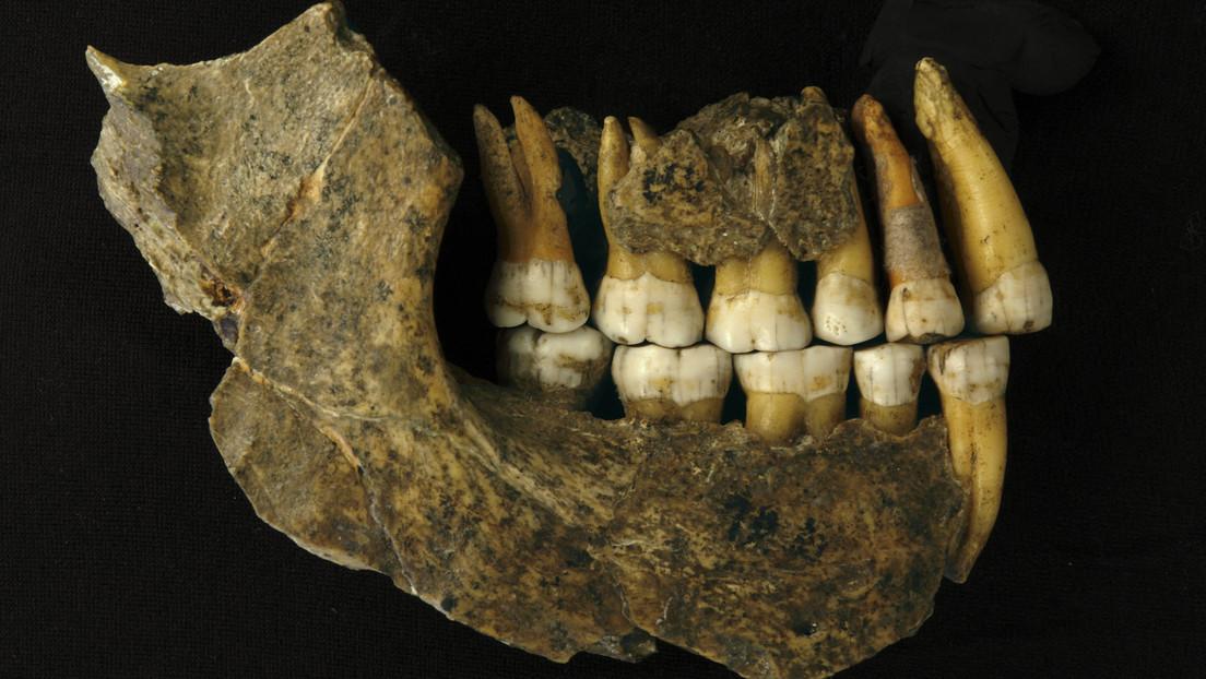 Reevaluación de fósiles de neandertales muestra que habrían desaparecido del noroeste de Europa hasta 20.000 años antes de lo que se pensaba