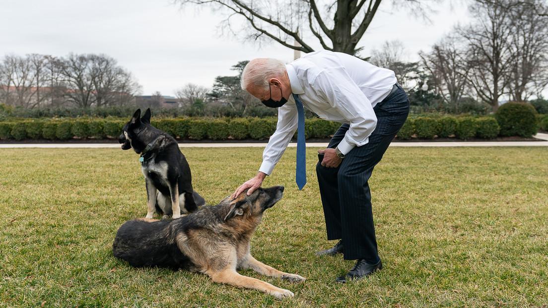 Sacan de la Casa Blanca a los dos perros de Joe Biden por comportamiento agresivo