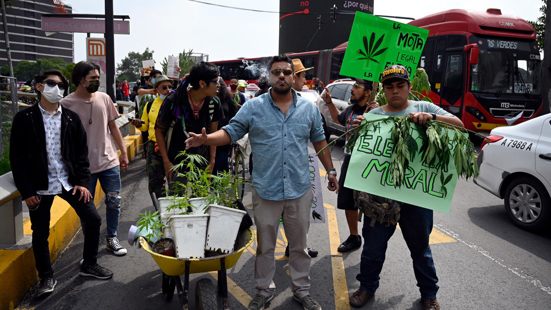 Hacia la histórica legalización de la marihuana en México: el dictamen es modificado y pasa al Senado para la votación final