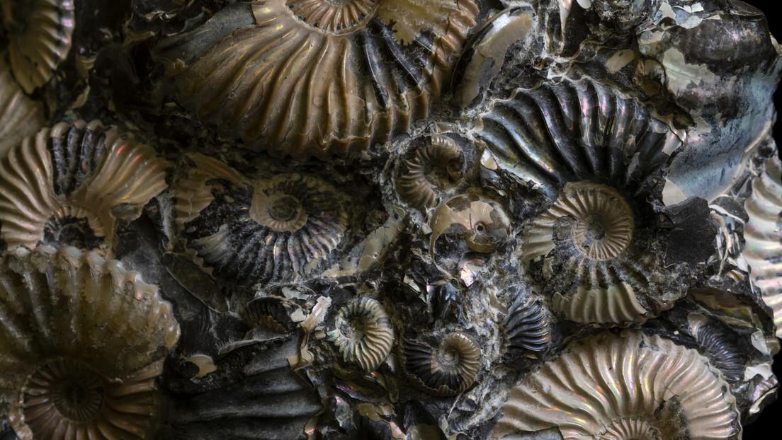 Descubren que el aumento de los depredadores marinos revolucionó la vida oceánica de forma tan drástica como las extinciones masivas