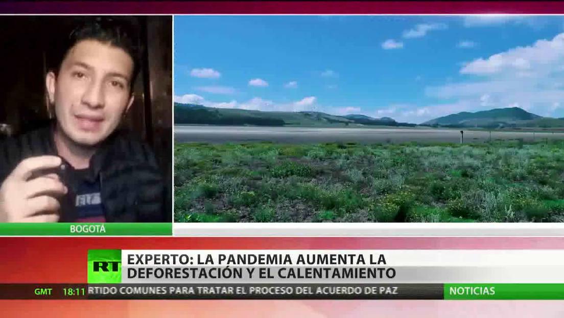 Experto advierte que la pandemia aumenta la deforestación y el calentamiento global