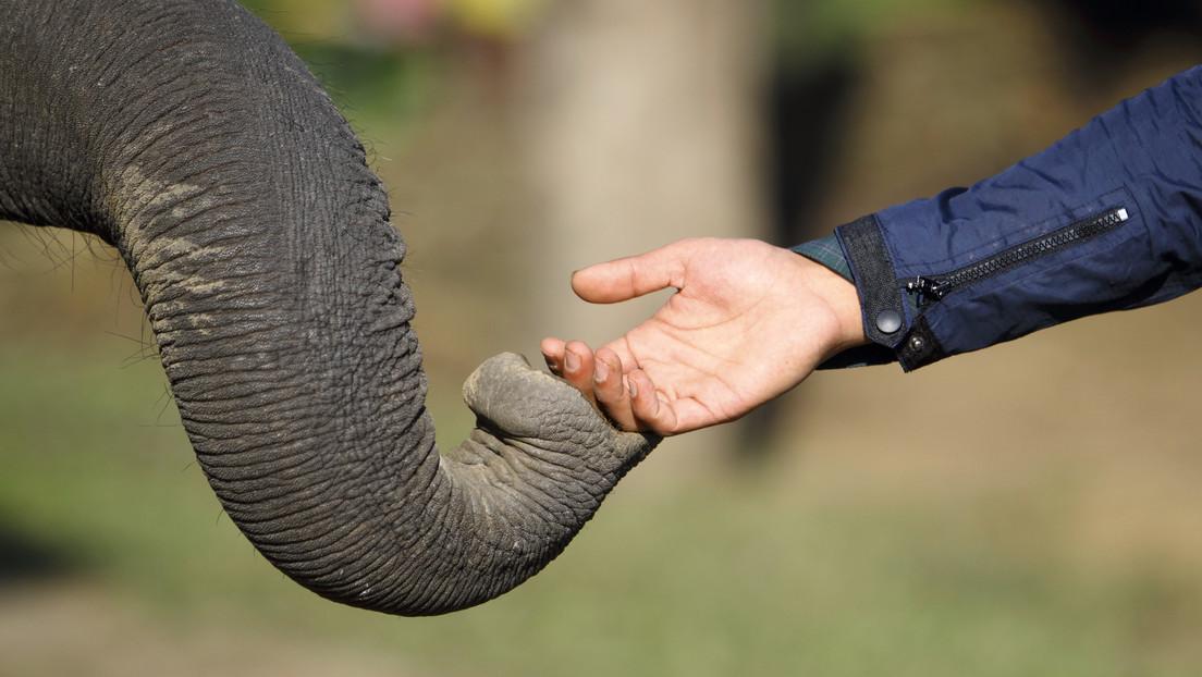 FOTO: El conmovedor instante en que un elefante reconoce y saluda al veterinario que le salvó la vida hace 12 años