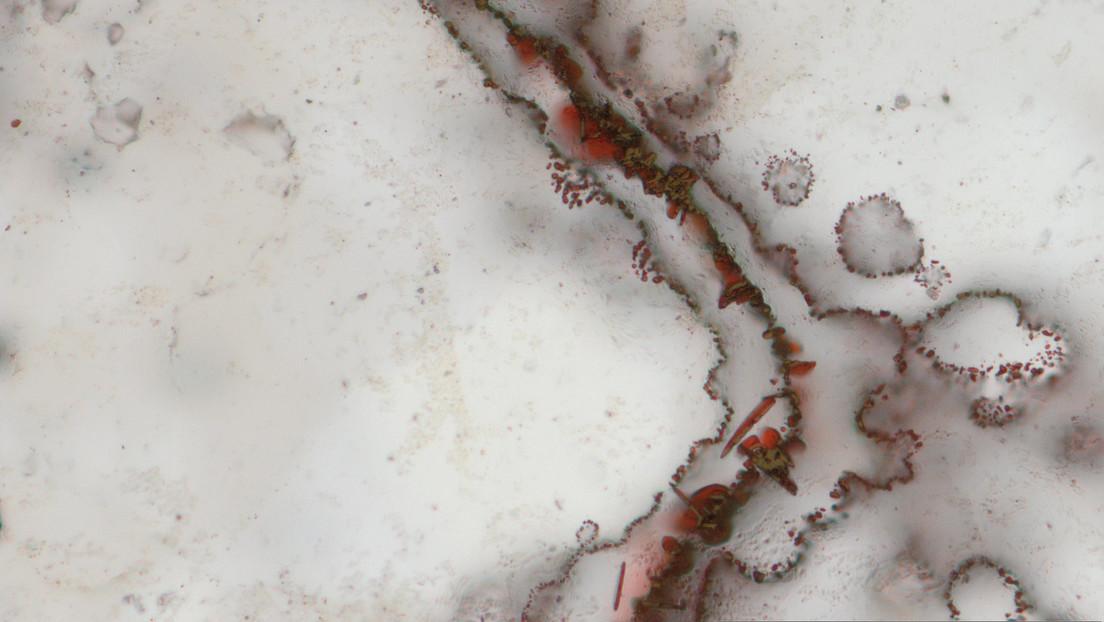 Descubren microbios desconocidos para la ciencia en la Estación Espacial Internacional