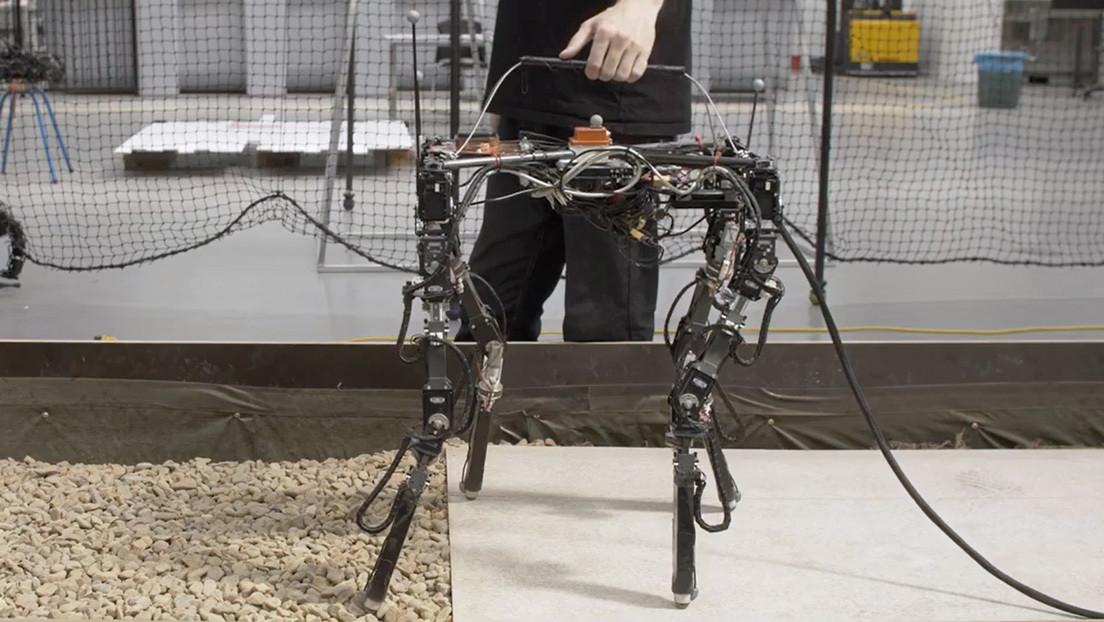 VIDEO: Ingenieros diseñan un robot que ajusta la longitud de sus patas en función de la superficie