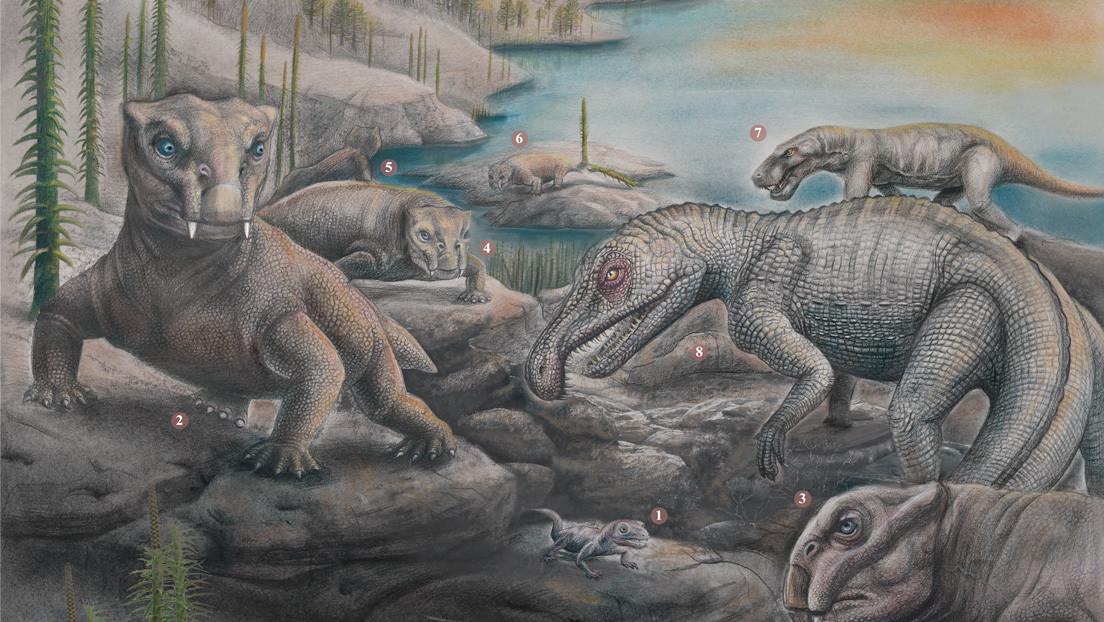 Científicos estiman que solo el 5 % de las especies sobrevivieron a la 'Gran Mortandad' y explican cómo se recuperaron los ecosistemas