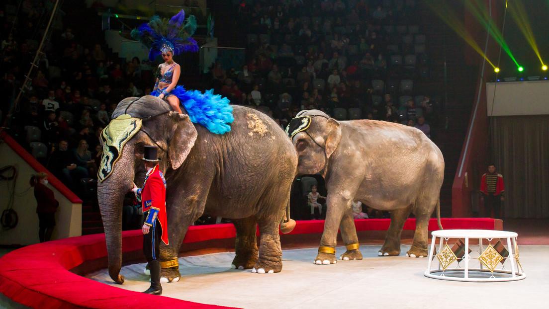 VIDEO: Dos elefantes se pelean en plena actuación en un circo repleto de gente