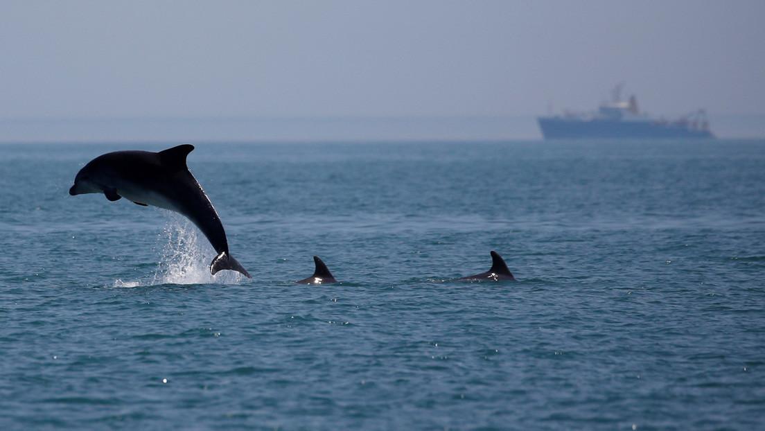 La actividad humana pone a los mamíferos oceánicos en una encrucijada: el 25 % de las especies está amenazada