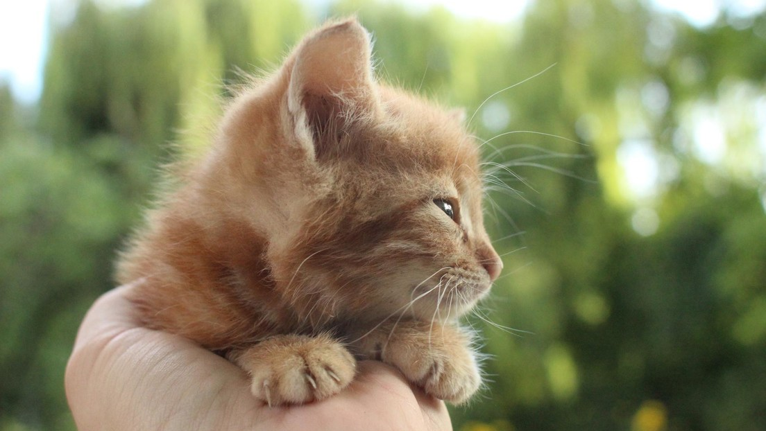 VIDEO: Una gata lleva a sus crías que no pueden abrir los ojos a una clínica, ¡y les ayudan!