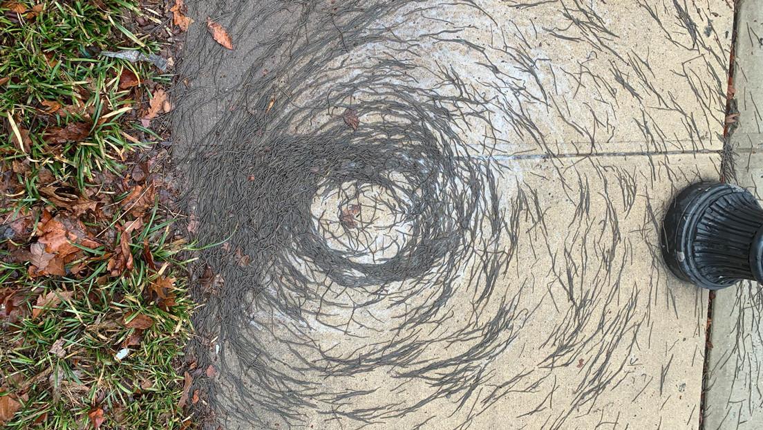 """Un extraño """"tornado de lombrices"""" deja desconcertados a los científicos en EE.UU. (FOTOS)"""