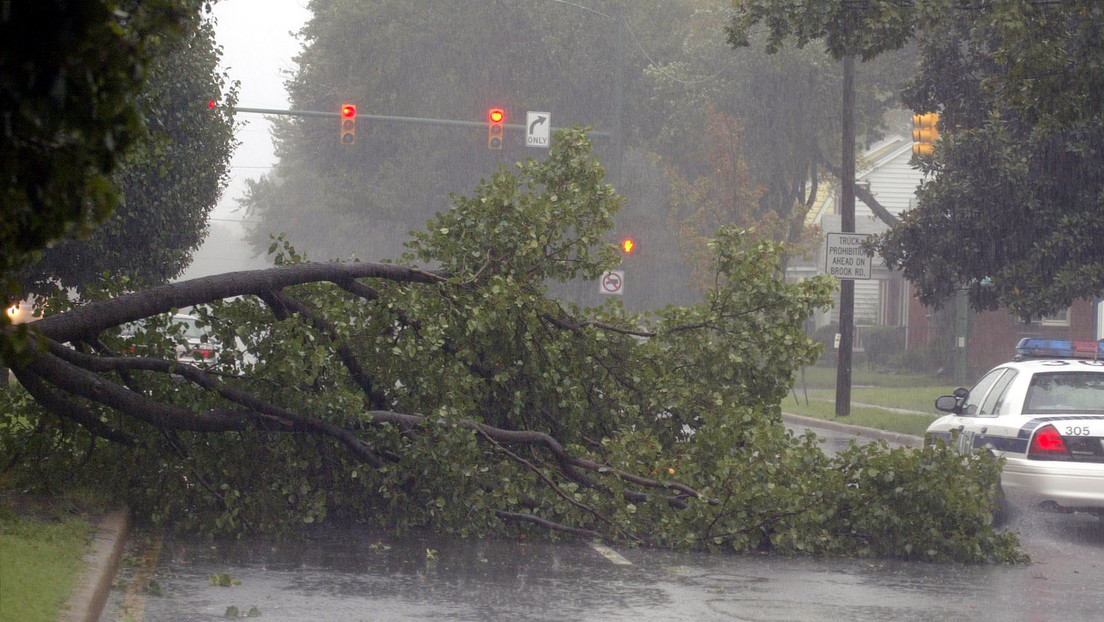 Muere una famosa 'tiktoker' estadounidense al caer sobre su auto una rama de árbol