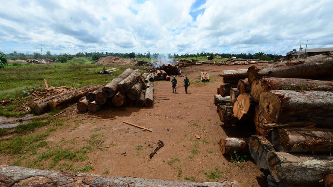 La deforestación mundial de los bosques tropicales aumentó un 12 % en 2020