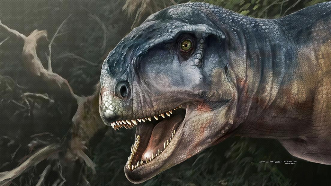 'El que causa miedo': descubren una nueva especie de un poderoso dinosaurio carnívoro en Sudamérica