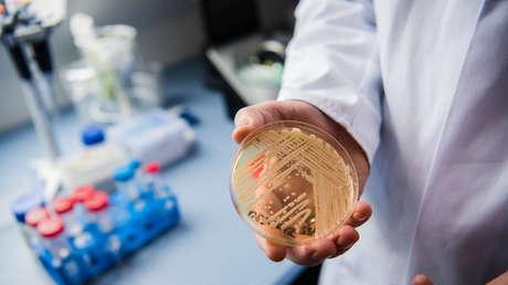 Encuentran por primera vez en la naturaleza un hongo mortal identificado en brotes hospitalarios