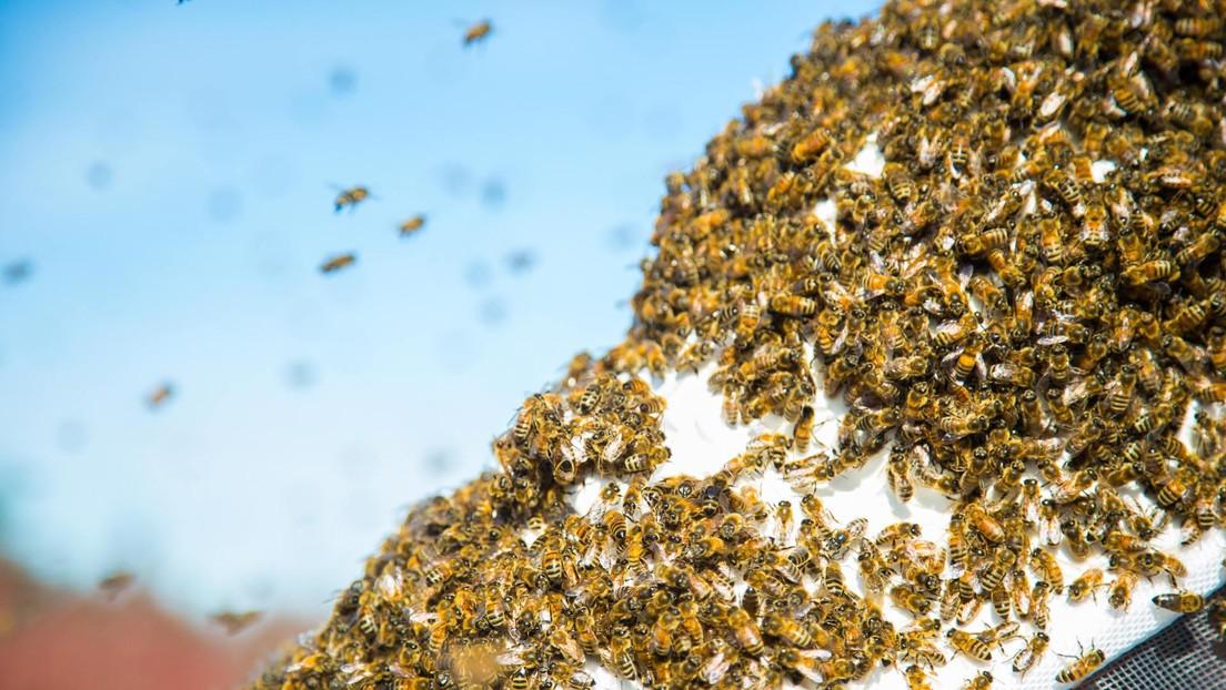 FOTOS: Un enjambre de 15.000 abejas se apropia de un auto mientras el conductor se va de compras