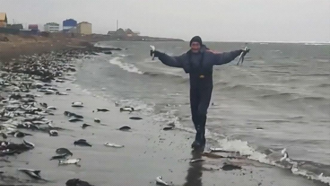VIDEOS, FOTOS: Un 'mar' de arenques inunda la costa de la isla rusa de Sajalín y los lugareños los 'pescan' a dos manos