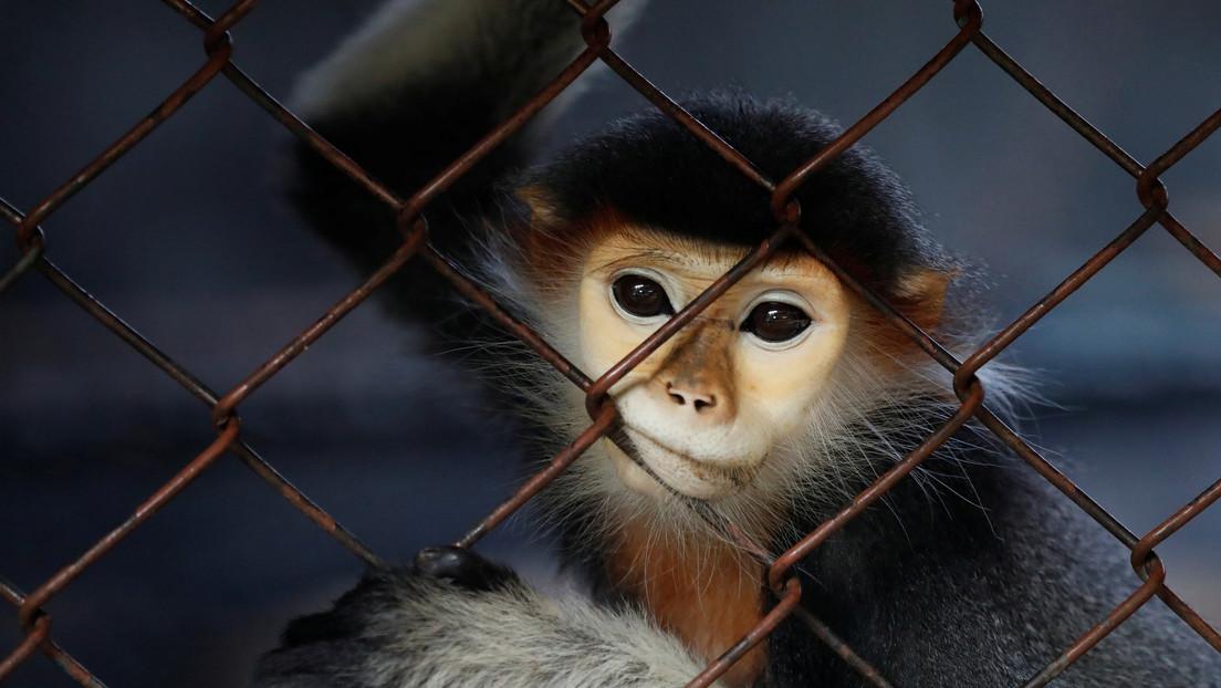 Un niño de 5 años pierde un dedo tras ser atacado por un mono en un zoológico de Portugal