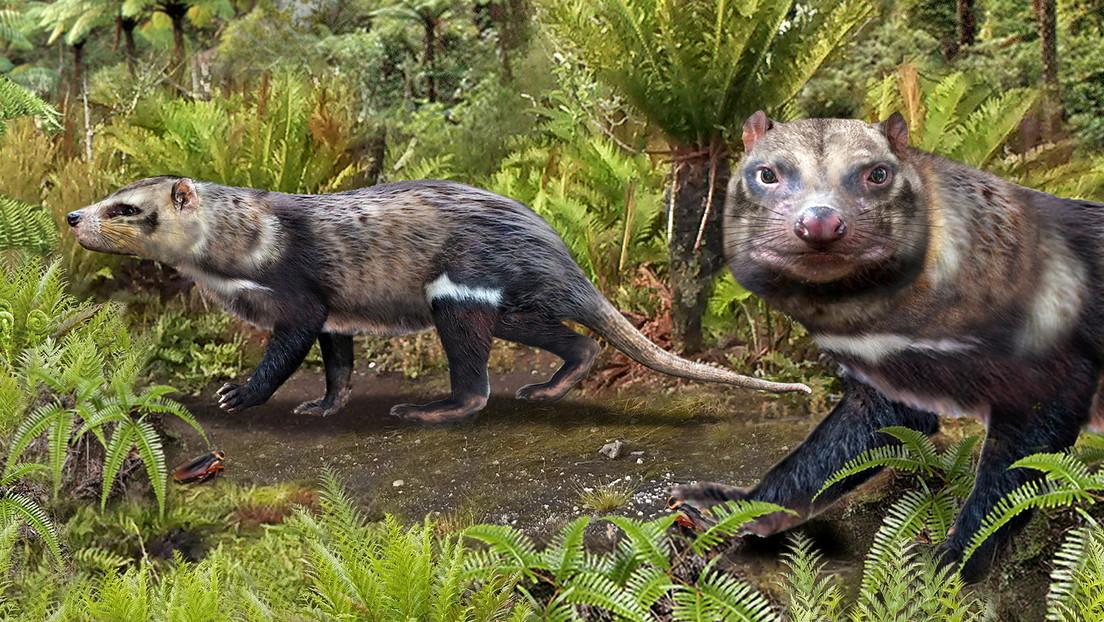 """Científicos desentierran a """"la bestia de cinco dientes"""", un antiguo mamífero que caminó entre los dinosaurios"""