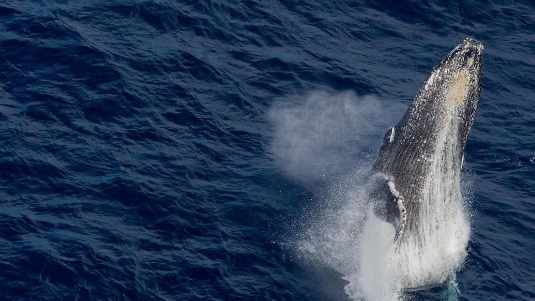 Un hombre cae al agua al chocar contra su bote una ballena y por poco termina en las fauces del cetáceo