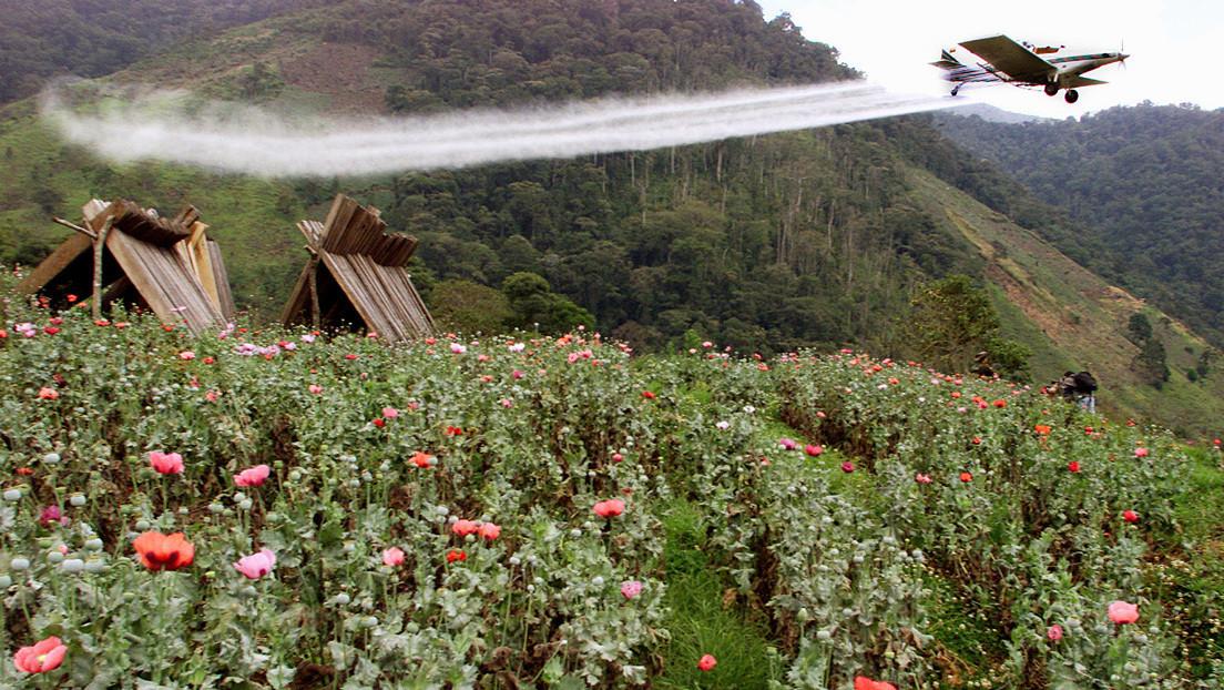 El polémico decreto que abre las puertas en Colombia a la fumigación de cultivos de coca con un herbicida cancerígeno