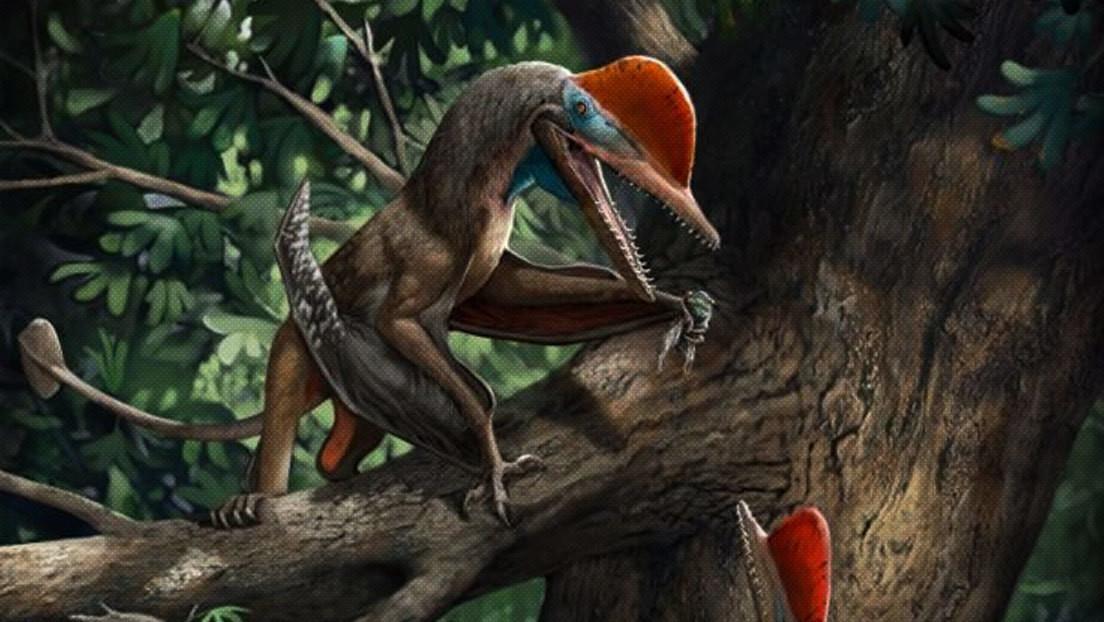Identifican una nueva especie de reptil volador del Jurásico con 'dedo de mono'