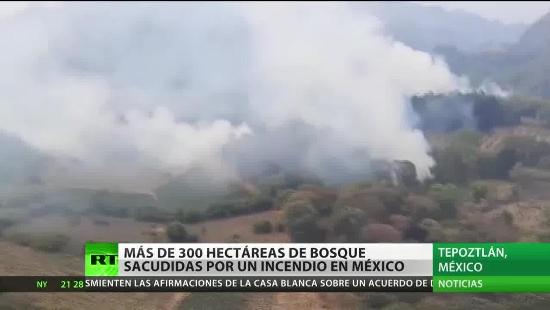 Un incendio en México afecta a más de 300 hectáreas de bosque