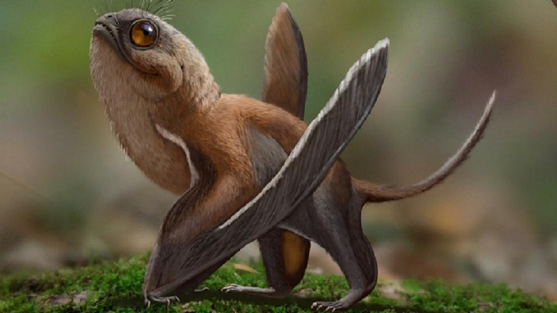 Científicos descubren un peculiar dinosaurio volador con un gran parecido con los 'porgs' de Star Wars