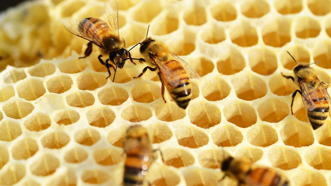 Un estudio revela la presencia en la miel del este de EE.UU. de un isótopo radiactivo proveniente de pruebas nucleares de hace décadas