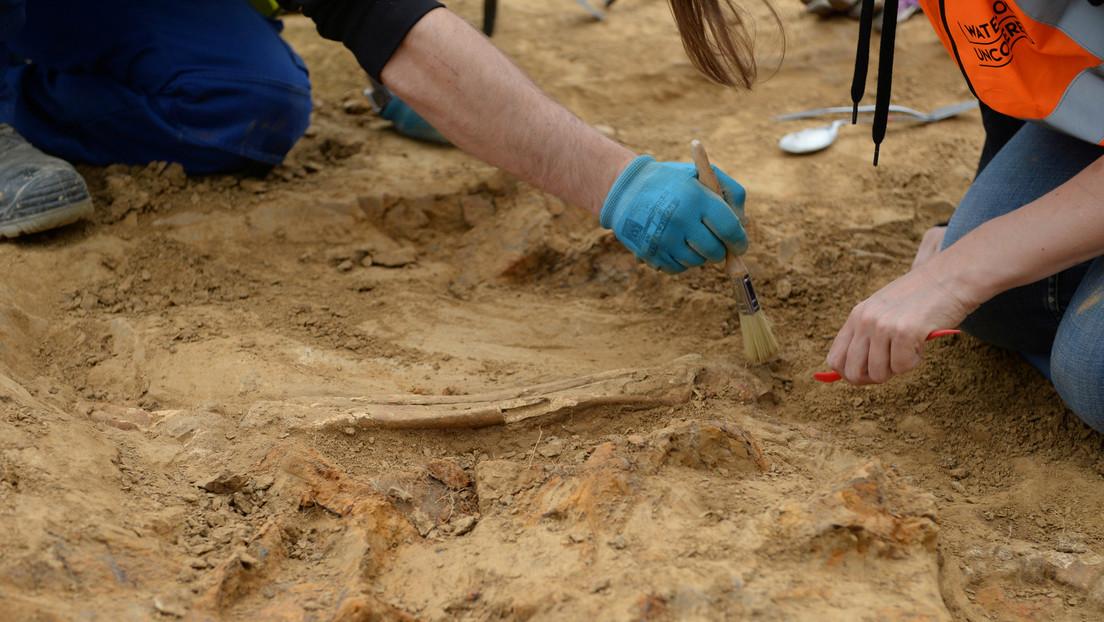 """Un agricultor irlandés descubre por accidente una """"intacta"""" e """"inusual"""" tumba de 4.000 años de antigüedad"""