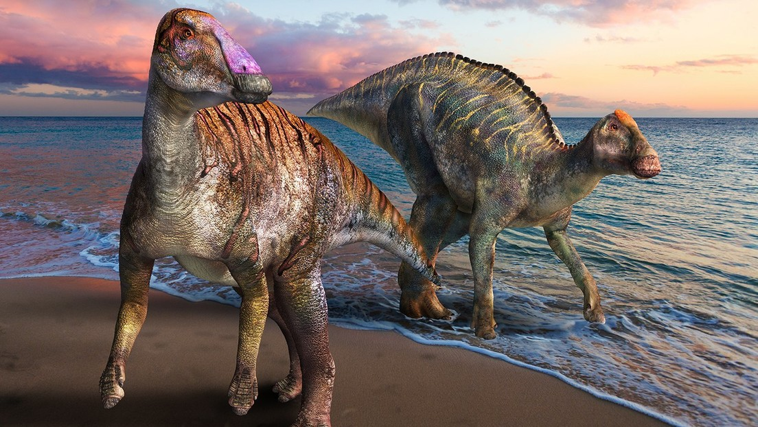 Identifican en Japón un nuevo dinosaurio de pico de pato con una dentadura inusual