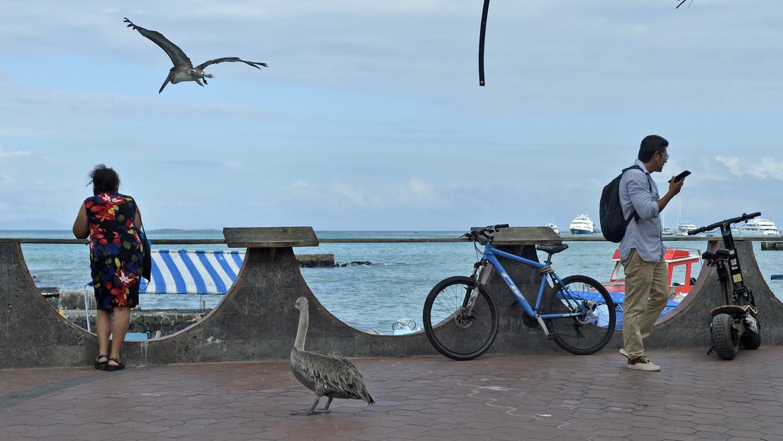 Galápagos estima convertirse en el primer archipiélago de Latinoamérica libre de covid-19