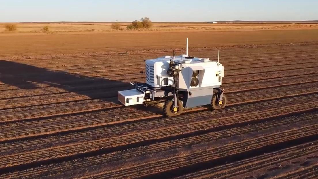 Un nuevo robot podría arrancar de cuajo uno de los mayores desafíos de la industria agrícola