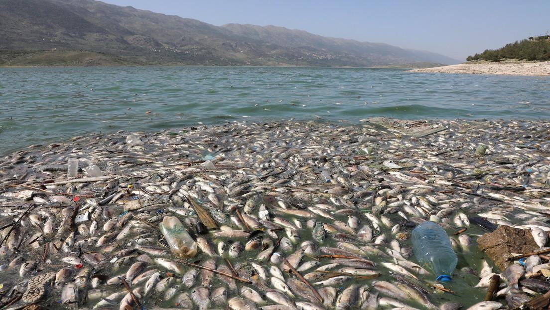 Al menos 40 toneladas de peces muertos aparecen en la orilla de un lago artificial en Líbano