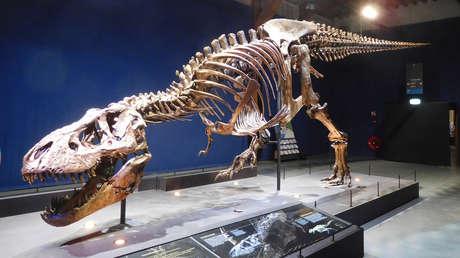 Un modelo biomecánico muestra que el 'Tyrannosaurus rex' era igual de 'lento' que un humano