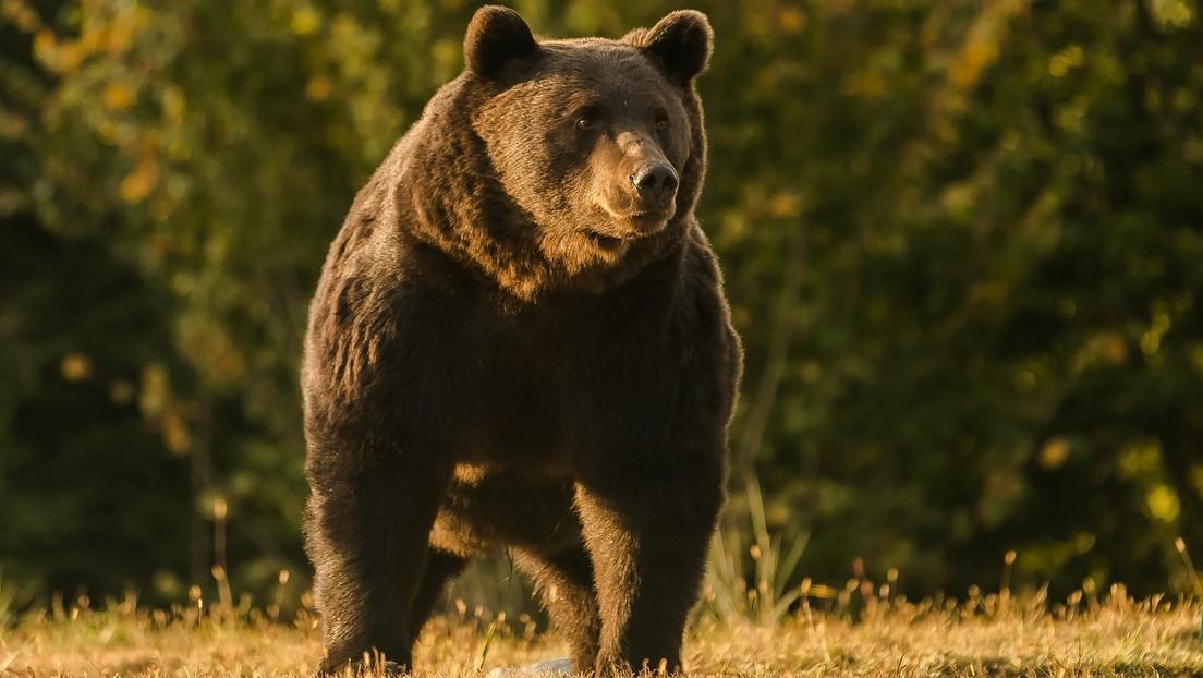Acusan a un príncipe de Liechtestein de matar al oso más grande de Rumania y probablemente de la Unión Europea