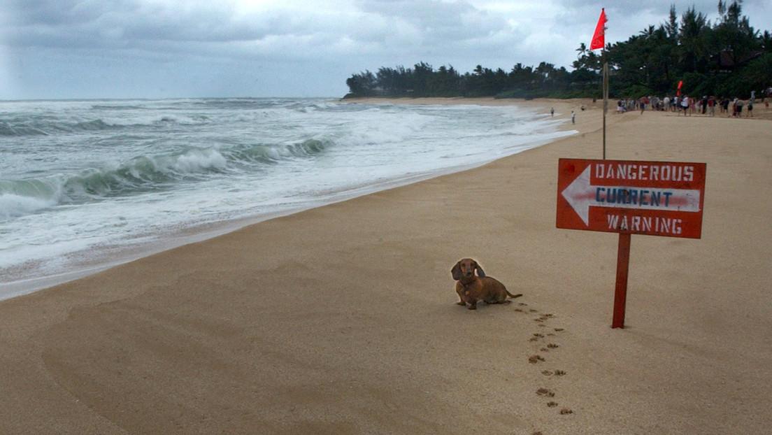 """""""Mi alma dejó mi cuerpo"""": El momento en que una niña de 6 años se topa con un tiburón en una playa de Hawái (VIDEO)"""