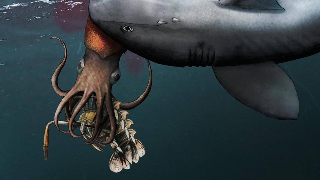 Descubren fósil de un calamar que hace 180 millones de años fue cazado por un tiburón mientras se comía una langosta