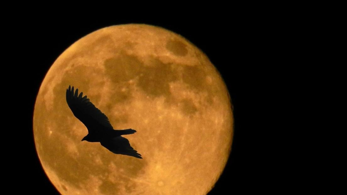 Una aerolínea australiana ofrece un vuelo para observar 'de cerca' la superluna y un eclipse lunar total