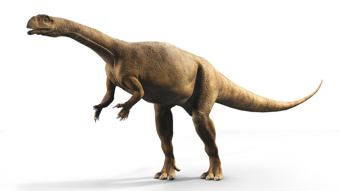 Descubren que un dinosaurio que vivió hace 200 millones de años en África crecía como un árbol, variando de una temporada a otra