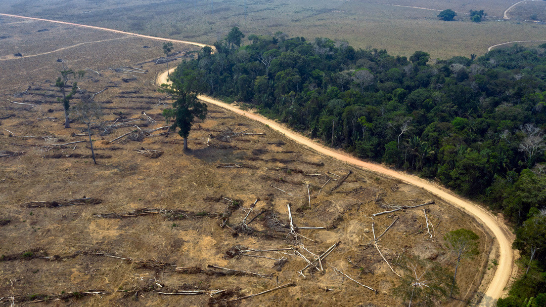 """""""Regularizar tierras ocupadas ilegalmente"""": Las amenazas que se ciernen sobre la Amazonía en plena pandemia"""