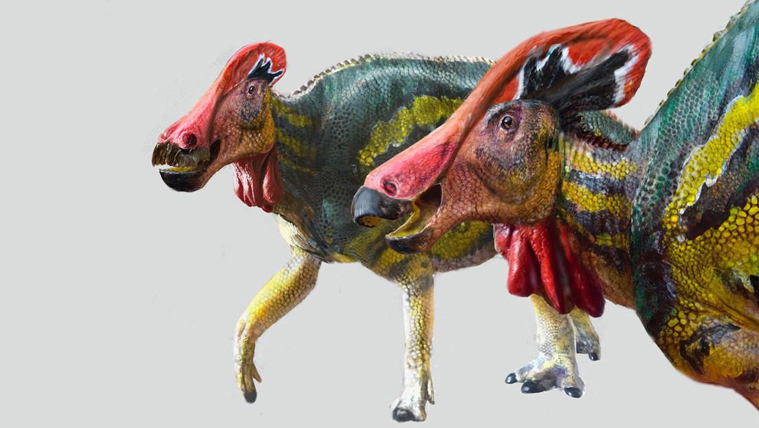 """Paleontólogos mexicanos identifican una nueva especie de dinosaurio """"platicador"""""""