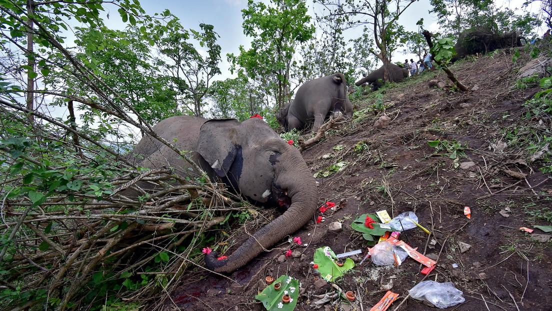 Encuentran muertos a 18 elefantes en la India (y se cree que los mató un rayo)