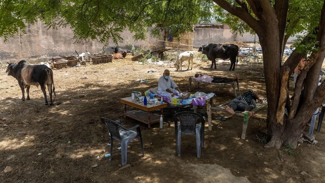 Un indio vive 11 días en un árbol para no contagiar el covid-19 a su familia