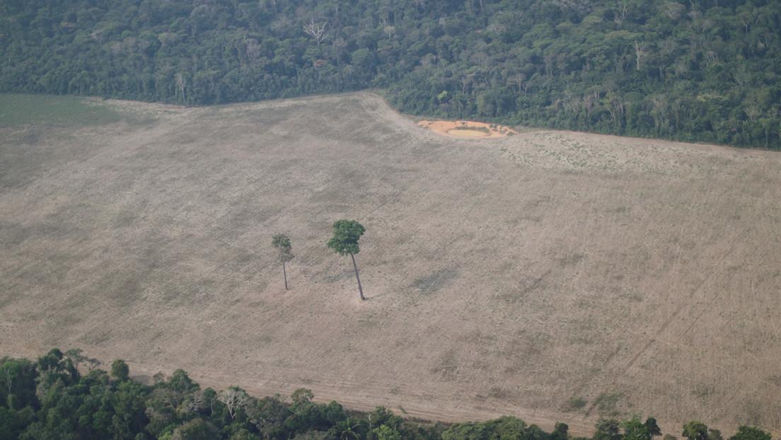 """La ocupación ilegal en la Amazonía creció un 56 % en dos años por el """"efecto Bolsonaro"""", según una ONG"""