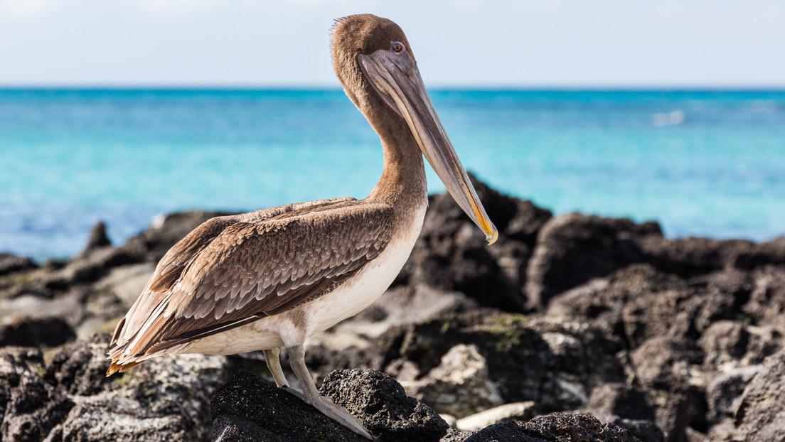 Leonardo DiCaprio y organizaciones ambientalistas destinarán 43 millones de dólares a restaurar el ecosistema de las Islas Galápagos
