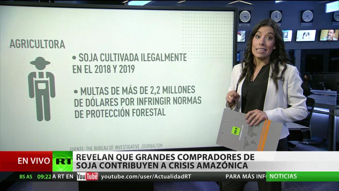 Revelan que grandes compradores de soja contribuyen a la crisis en la Amazonia