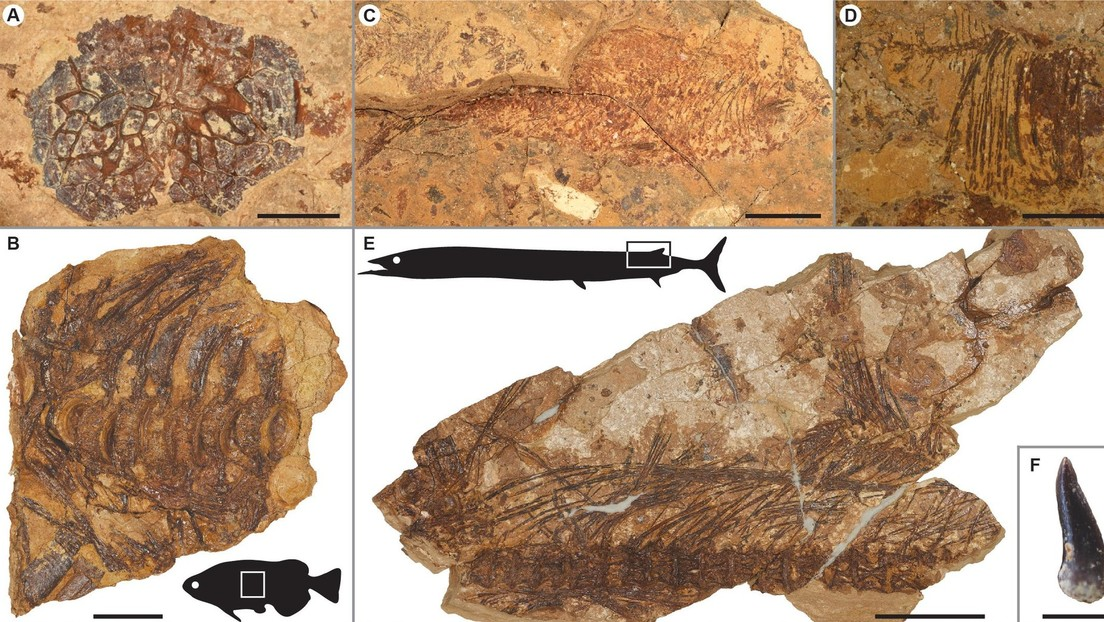 Fósiles hallados en Egipto prueban que los peces sobrevivieron a un pico del calentamiento global hace 56 millones de años