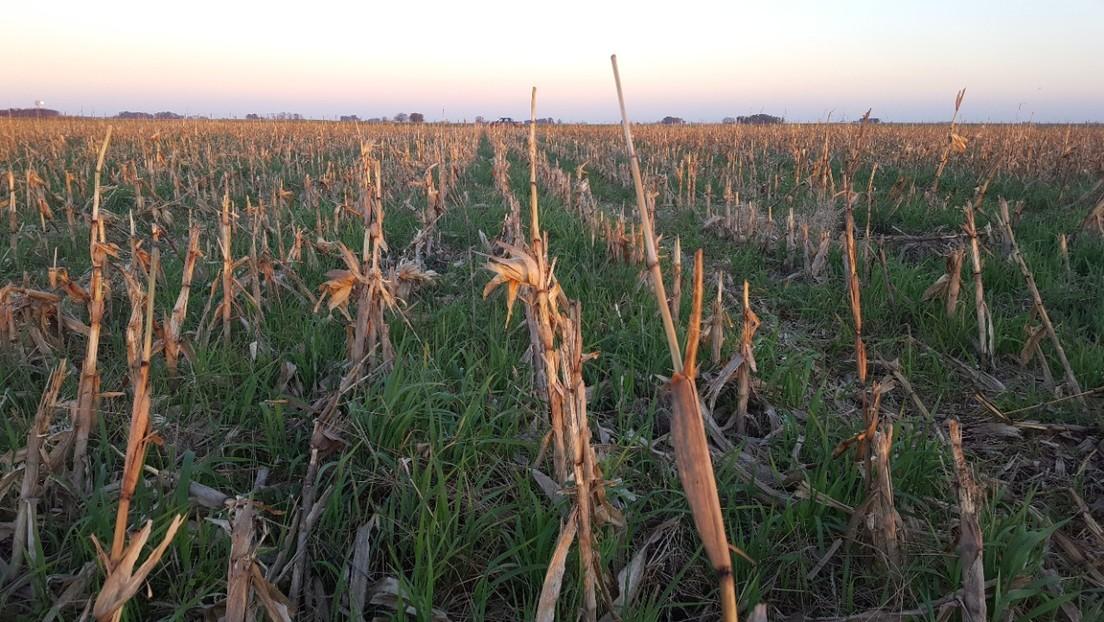¿Se puede masificar la producción agroecológica? El caso del terrateniente argentino que eliminó los químicos y redujo sus costos un 60 %