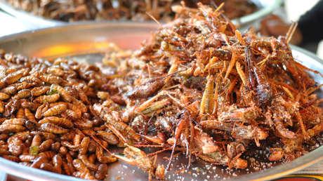 Los humanos del futuro tendrán que comer larvas y gusanos para evitar la desnutrición, según científicos