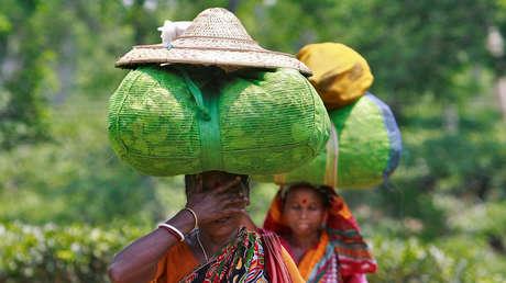 La pandemia de covid-19 y la fuerte sequía hacen peligrar la cosecha de té en la India
