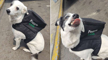 Una perra se vuelve viral por 'repartir' comida a domicilio para ayudar a un refugio de animales en México (FOTO)
